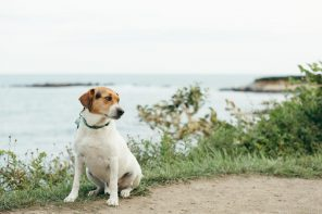 Hitting the Road with Fido: Pet-Friendly Destinations