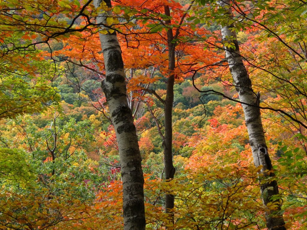 5 Fall Hikes In Southern Vermont New England Living