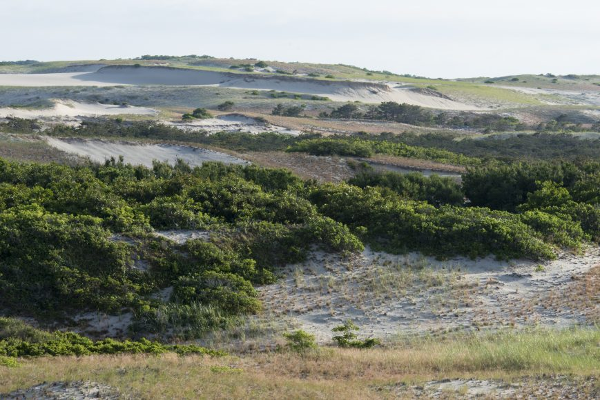 Dune View from Boris's