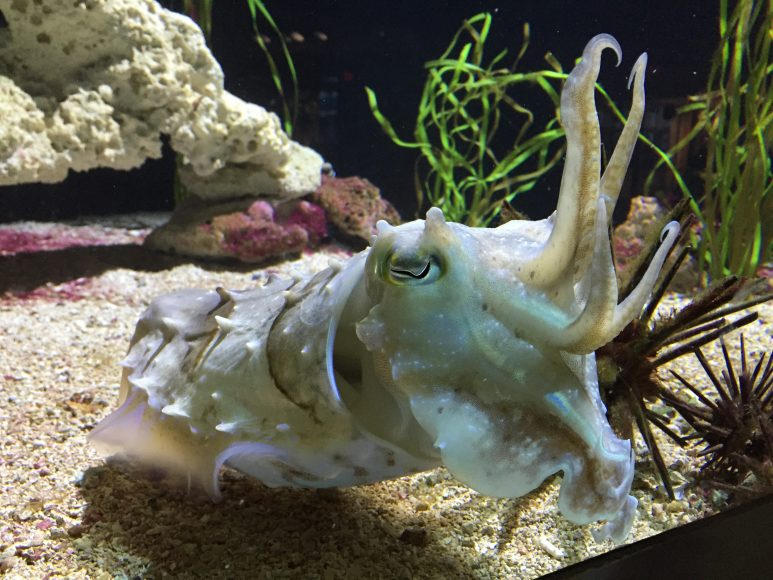 NEAqCuttlefish_IMG_0896_MRiley