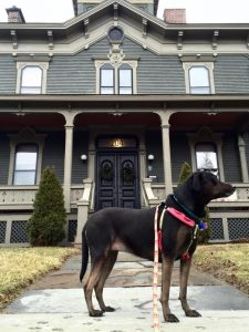 pet-friendly New England