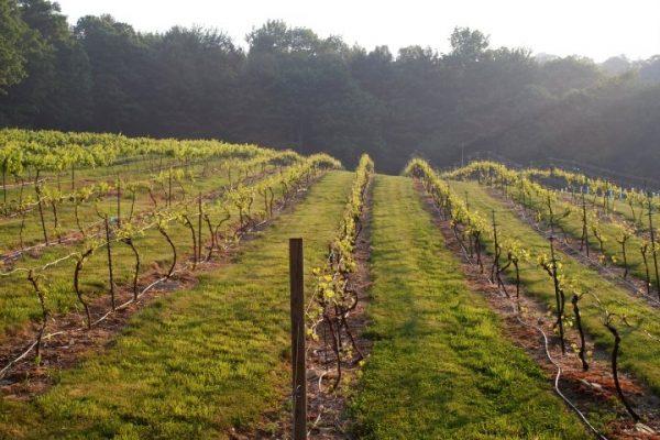 Savage Oaks Winery