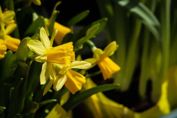 Happy Spring! Six Ways to Celebrate the Season | New England Living
