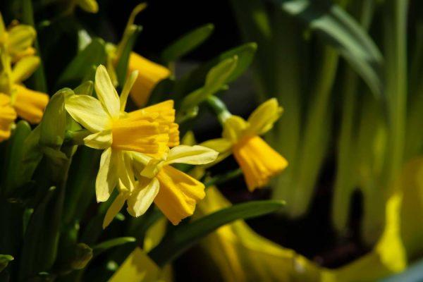 Happy Spring! Six Ways to Celebrate the Season | New England Living