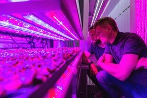 Freight Fresh: Container farming is revolutionizing the farm-to-table paradigm.