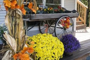 Fall Flowers: Pro Advice on Embracing the Season